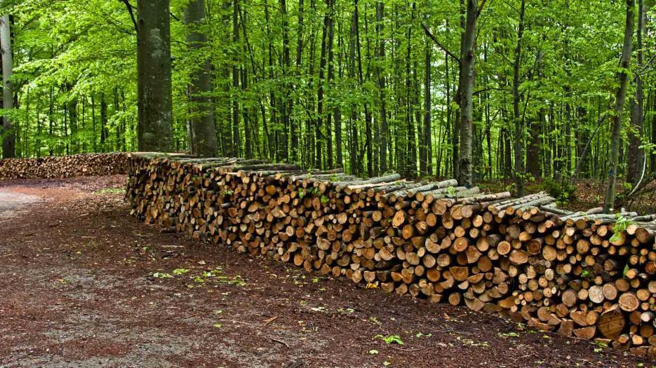 Сертификация дърводобив - Infocall.bg