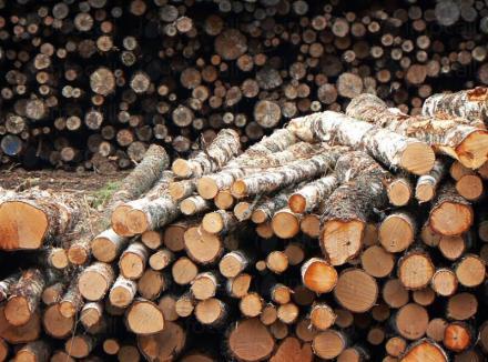 Дърва за огрев и дървен материал в Сърница - Велинград - Триманс 1 ЕООД