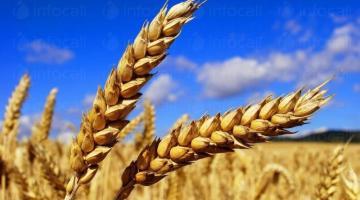 Производство селскостопанска продукция в Гарван-Ситово-Infocall.bg