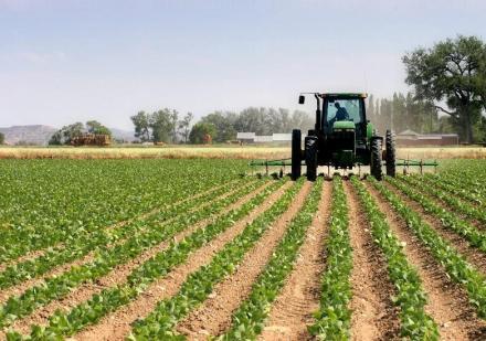 Частни земеделски услуги в Долни Дъбник - Земеделски производител Долни Дъбник