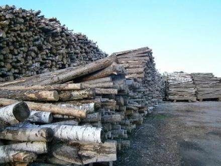 Дърва и дървен материали в Мадан и Смолян - Молайс ЕООД