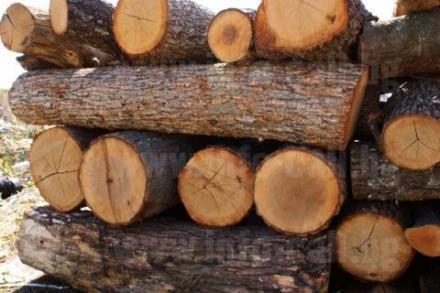 Дърводобив и дървообработка в Дулово - Дърводобив Дулово