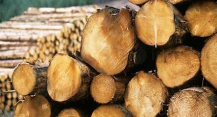 Дърводобив и търговия с дървен материал в София-Център - Дърводобив София-Център