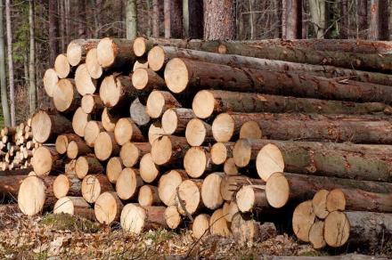 Дърводобив в град Велинград - Санкеви ООД