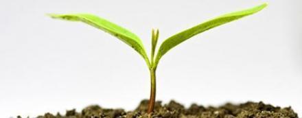Дистрибуция и търговия на препарати за растителна защита в София-Оборище - Препарати за растителна защита София