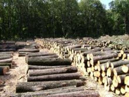 Добив и обработка на дървен материал Панагюрище - Дървен материал Панагюрище