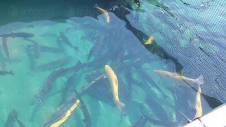 Жива риба в София - Жива риба София