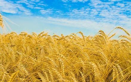 Консултантски услуги в земеделието в Разград - Земеделска продукция Разград
