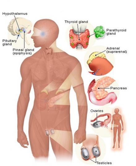 Лечение на ендокринни заболявания в Русе - Ендокринолог Русе