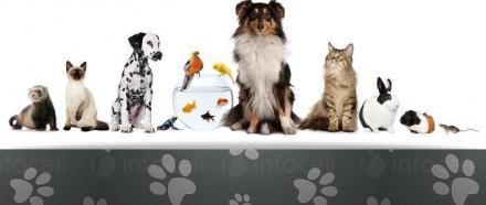 Лечение на заразни и незаразни болести при дребни животни в Търговище - Ветеринарна амбулатория Д-р Найденови