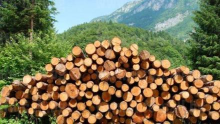 Обработка дървен материал в Омуртаг-Търговище - Дървен материал Омуртаг
