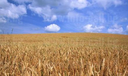 Обработка земи и реализация на селскостопанска продукция област Плевен - ЧПТК Марен