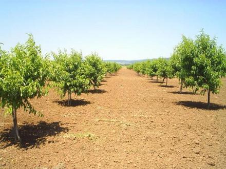 Отглеждане на плодове в Страцин-Поморие - ЗП Христо Гочев