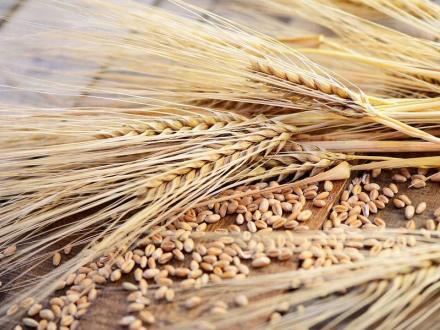 Отглеждане на селскостопанска продукция в Гарван-Ситово - ЗК 16 Декември