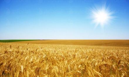 Отглеждане на зърнени култури в Септември-Пазарджик - Прогрес