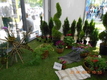 Продажба на цветя на едро и дребно в Бургас - Разсадник Иванови ЕООД