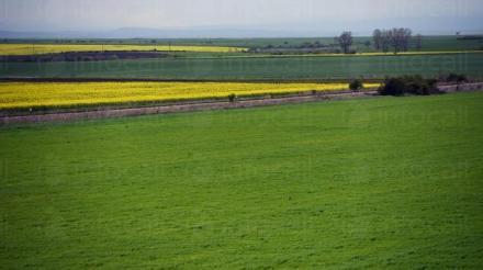 Производство и реализация на селскостопанска продукция в Нови пазар  - Виван ЕООД