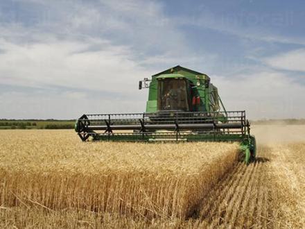 Производство и търговия на земеделска продукция в Костиево-Пловдив - Земеделска кооперация-област Пловдив