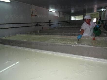 Производство на млечни продукти в област Бургас - Гана 99 ООД