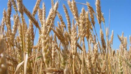 Производство на селскостопанска продукция в Любимец-Хасково - Селскостопанска продукция Любимец