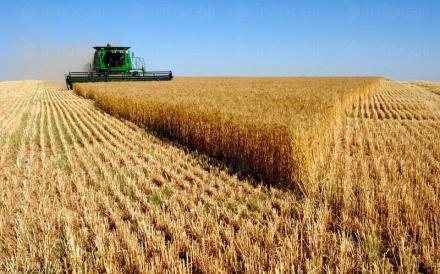 Производство на селскостопанска продукция в община Димитровград - ЗКПУ Ябълково