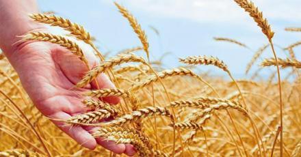 Производство на селскостопанска продукция в Стражица - Евро Къмпани ООД