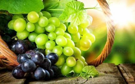 Производство на вино в Добротица-Ситово - Винарска изба Опрев