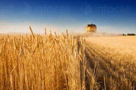 Производство селскостопанска продукция Каменец-Пордим - Селскостопанска продукция Пордим
