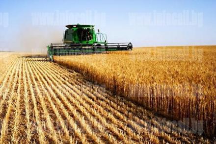 Производство селскостопанска продукция  в Езерче-Цар Калоян - Терас 3 ООД