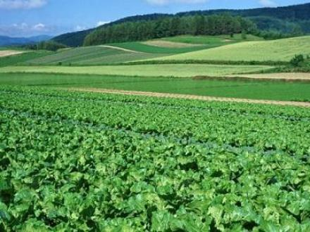 Производство царевица, пшеница, рапица, слънчоглед и бамя в Недан-Павликени - ЗКПУ Златен Клас