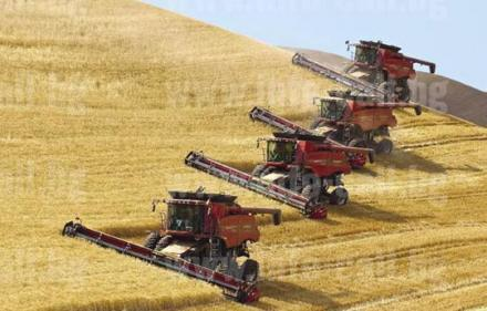 Производство земеделска продукция в Лозно-Кюстендил - ЗКПУ Златно поле