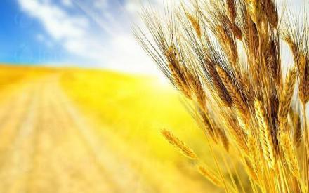 Растениевъдство и животновъдство в Хърлец-Козлодуй - ПТЗК Аугуста
