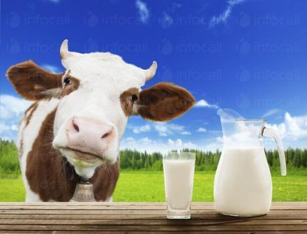 Разносна търговия сирене, кашкавал, колбаси Плевен - Млечен Лидер ЕООД