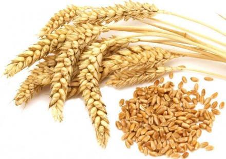 Селскостопанска продукция в Ботево-Тунджа - Лаки 97 ООД