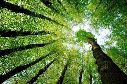 Сертификат за проследяване продукти от дървесина в София - Сертификация дърводобив