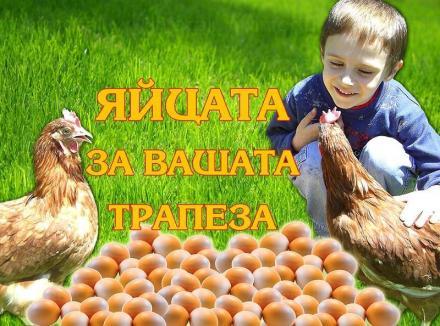 Стокови яйца и носачки в Пловдив - Марвас 90 СД
