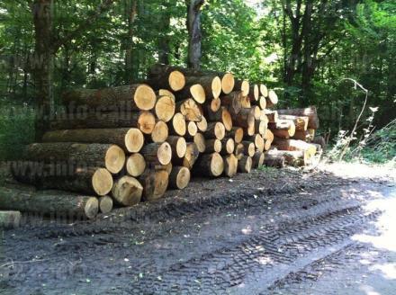 Стопанисване гори и търговия със селскостопанска продукция в област Търговище - Дърводобив Търговище