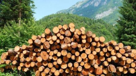 Търговия с дърва и дървен материал в Силистра - Глобал Текх