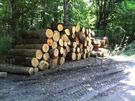 Търговия с дървен материал в Стара Загора - Дърводобив Стара Загора