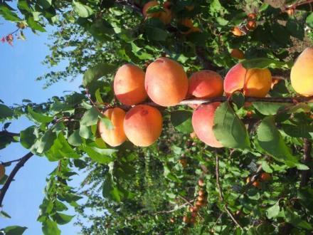 Търговия с пресни плодове Добрич - Био Фрутс  ЕООД