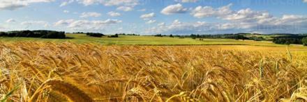 Търговия със зърно в Търговище - ЕТ Васико - Кольо Василев