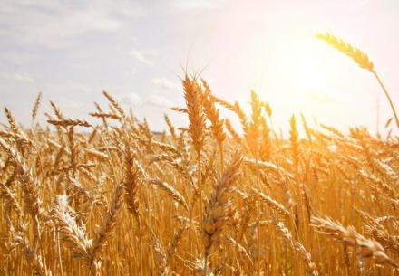 Търговия със земеделска продукция в Нова Върбовка-Стражица  - ЗКПУ Зорница 92