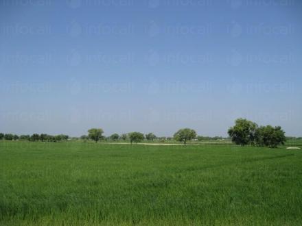 Търговия със земеделска продукция в община Аврен - Кооперация в Аврен