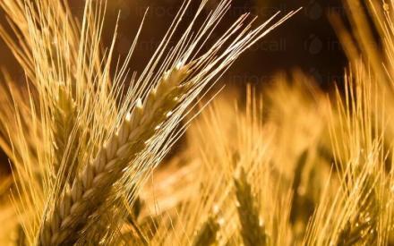 Търговия със земеделска продукция в община Силистра - Казимир 93