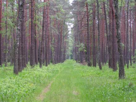 Устойчиво използване на природните ресурси в София - Сертификация дърводобив