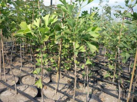 Външно озеленяване в Каспичан и Шумен - Калинка Панайотова ЕТ