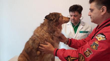 Ветеринар в София-Люлин - Orion