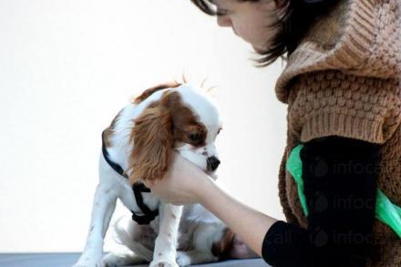Ветеринарна клиника София-Оборище - Ветеринарна клиника София