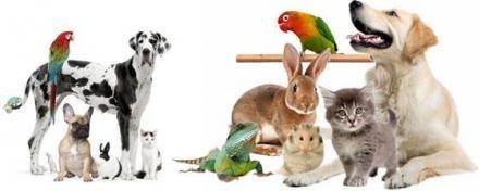 Ветеринарни услуги във Видин - Николас