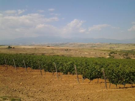 Винопроизводство в Долно Спанчево-Благоевград - Мелник 2004 ЕООД